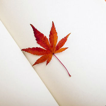 maple-leaf-book-pixabay