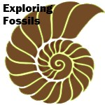 science kit - fossils