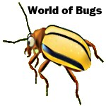 science kit - world of bugs